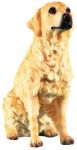Dog Breed Statues - Golden Retriever - - Large