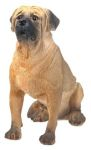 Dog Breed Statues - Mastiff