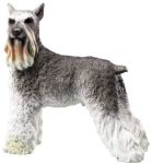 Dog Breed Statues Schnauzer - Large Dog Figurine Statue