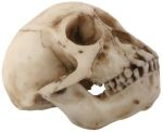 Monkey Skull Figurine